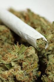 is marijuana a dangerous drug essay